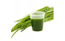 Alge in zelenje